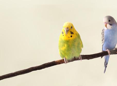 Will My Bird Learn To Talk?