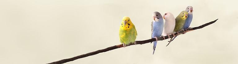 鸚鵡在樹枝上