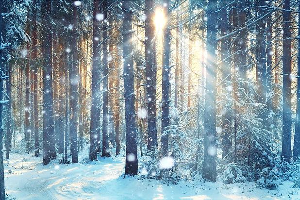 frosty winter landscape in snowy forest.