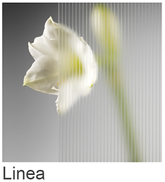 Linea.png