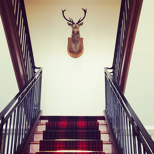Majestic Monday! #grandstaircase #angus #stag #tartan #reno #renovation #mondaymotivation #progress