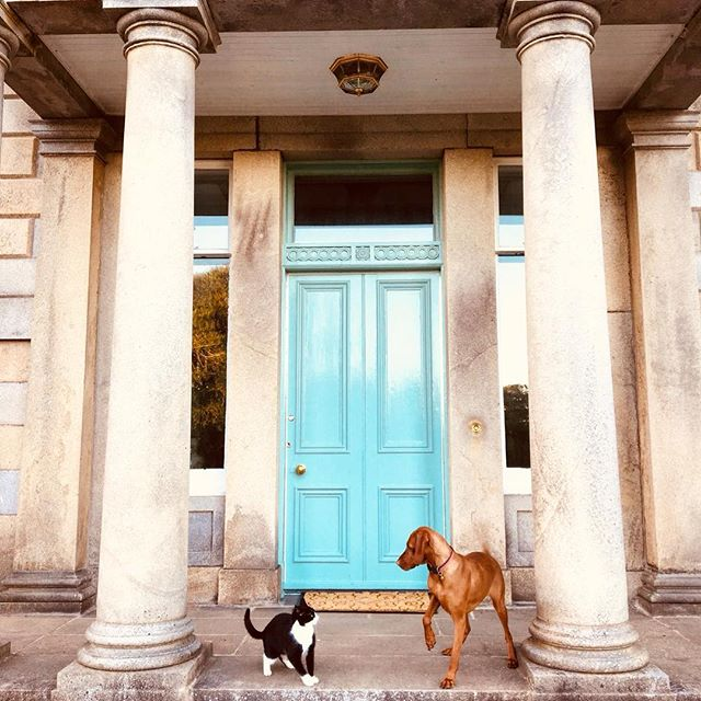 Fancy meeting you here! #happyweekend #animalmagic #bigfrontdoor #ruby #vizsla #vizslaofinstagram #w