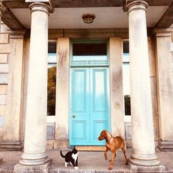 Fancy meeting you here! #happyweekend #animalmagic #bigfrontdoor #ruby #vizsla #vizslaofinstagram #w