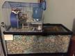 Aquarium with Topper