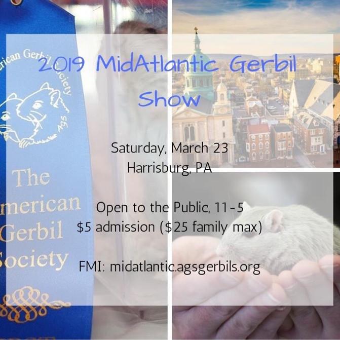 AGS MidAtlantic Gerbil Show