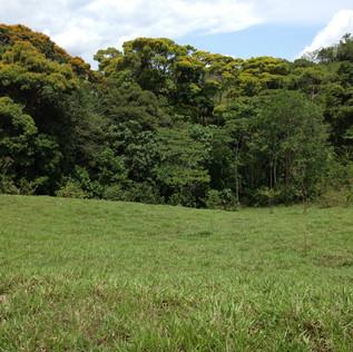23 Pasture.JPG