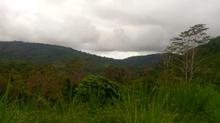 6 jungle view.jpeg