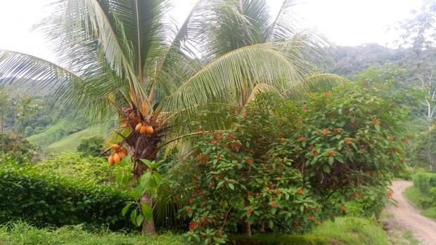 7 coconut 1.jpeg