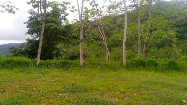 3 jungle view.jpeg