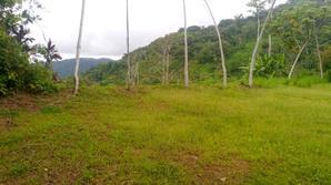 5 jungle view.jpeg