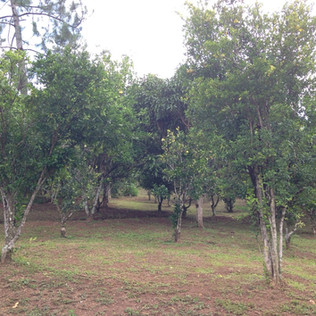 24 orchard.JPG