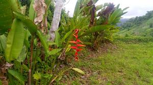 4 flowers.jpeg