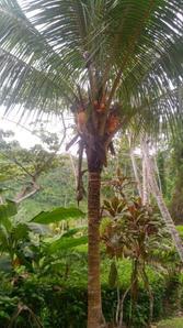 8 coconut.jpeg