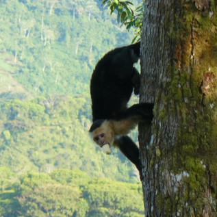 21-Monkey.JPG