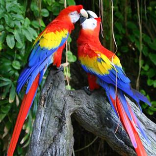 19 Scarlet Macaw.jpg