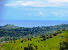 04 Ocean View.jpg