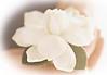 lotus gardenia.png