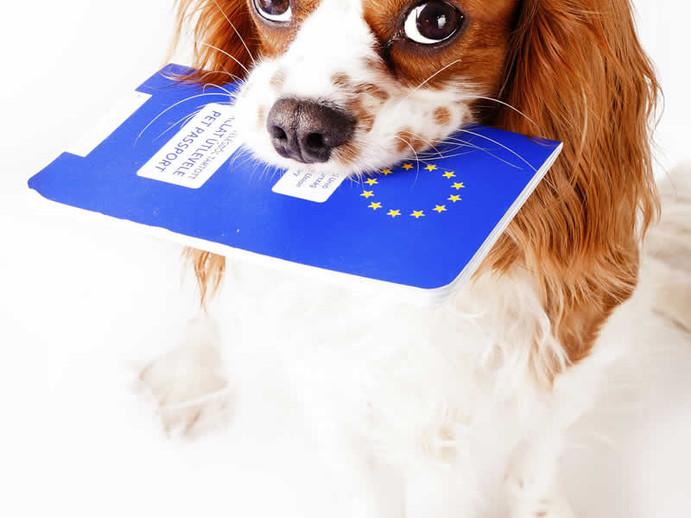 passport pet.jpg