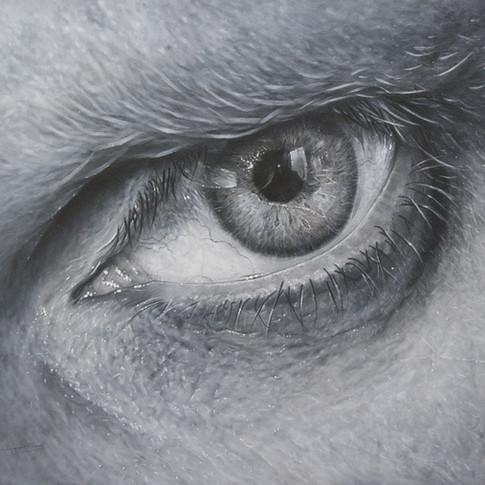 The artists eye