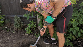Planting An Olive Tree (Or Any Tree Really)