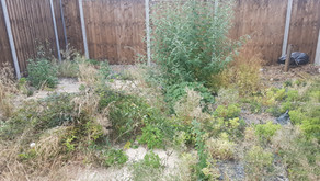 Garden Clearance (or Jungle Clearance!)...Admitting is the first step!