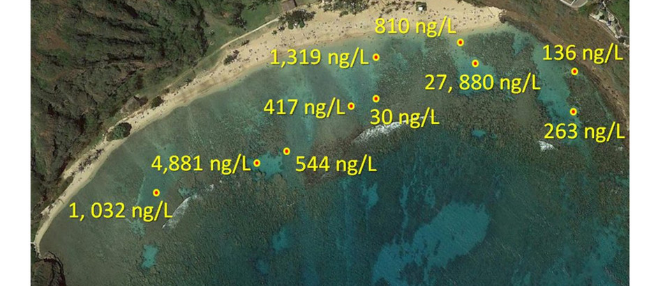Haereticus Lab Study Finds Sunscreen Pollution Threatens Hanauma Bay in Hawaii