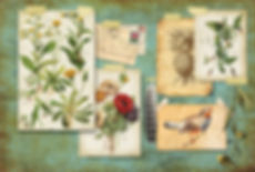 botanist_illo.jpg