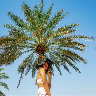 dubai palm trees