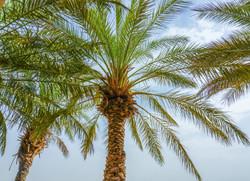Bab Al Shams desert staycation