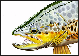Fly Fishing Artwork, Trout Art, Fish art, Trout Watercolor