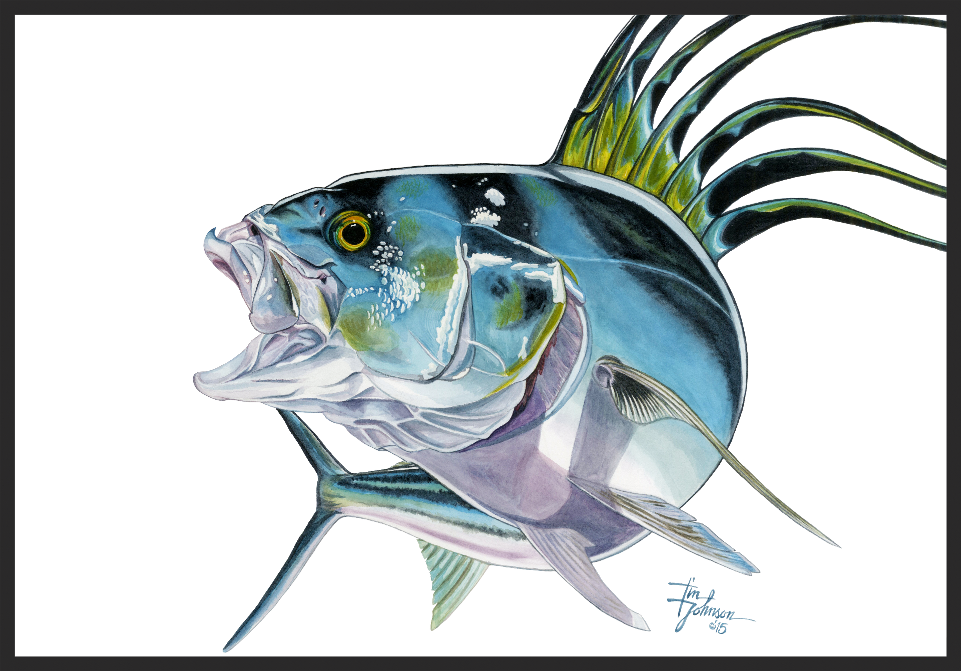 Crowing - Roosterfish Watercolor