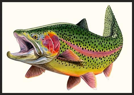 Green River Rainbow