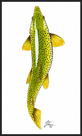 Fly Fishing Art, Trout Art, Brown Trout art, Trout Watercolor, brown trout paintings