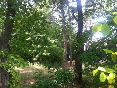 Плюты. Шикарный участок в лесу!!!