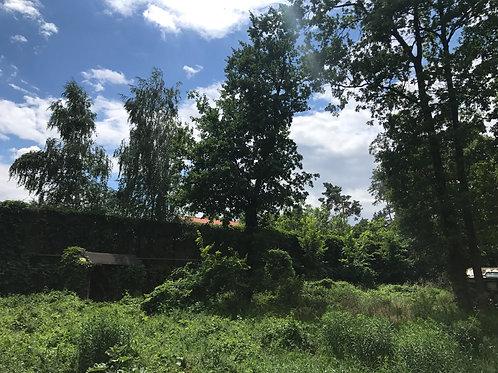 Романков участок в лесу
