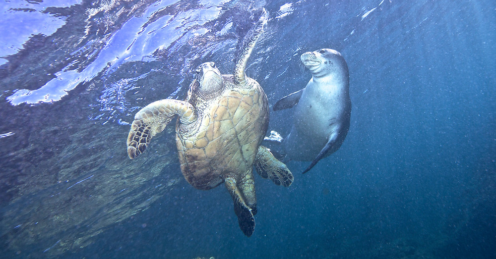 Turtle and Seal on the play.