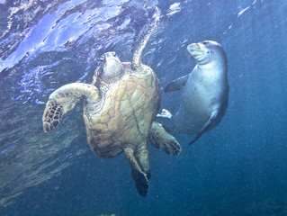 When Monk Seal meets Green Turtle