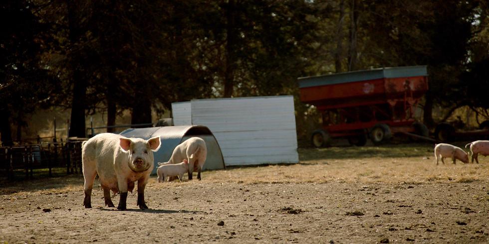 Virtual Hog Farm Tour