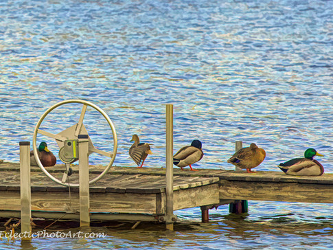 Ducks on Dock