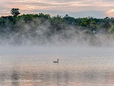Goose at Misty Dawn