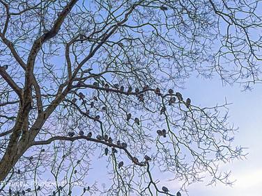 Pigeons at Dusk