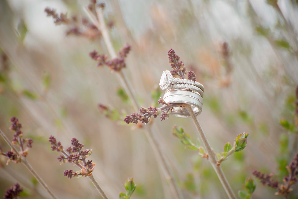 Wedding Rings on a Branch Spruce Meadows