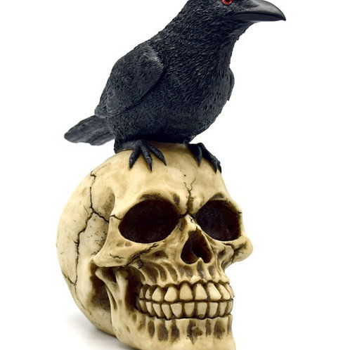 Raven Perched on Skull