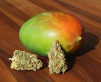 mango-weed_edited.jpg