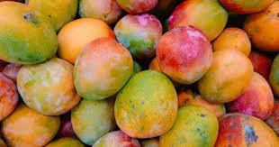 Hoe mango's de high van cannabis kunnen versterken