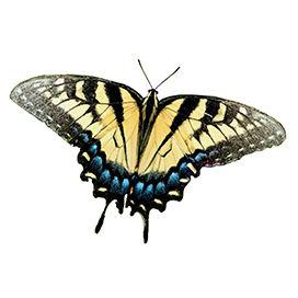 Бабочка 3 NEW Resol 24.jpg