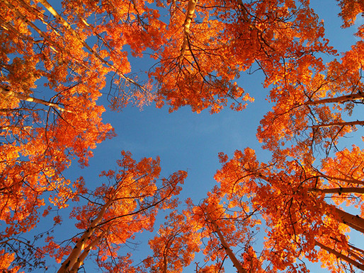 Blick in den Herbsthimmel. Sind Sie bereit ein grosses Bild anstatt zwei kleine sticken?