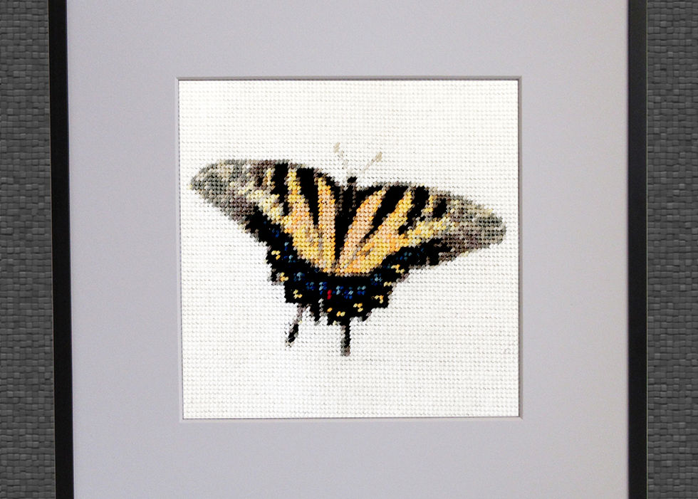 Tiger Schwalbenschwanz