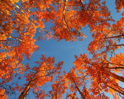 Blick in den Herbsthimmel