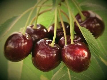 cherry-167341_640%2520(2)_edited_edited.